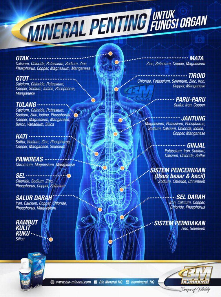 keperluan mineral mencukupi kepada organ manusia
