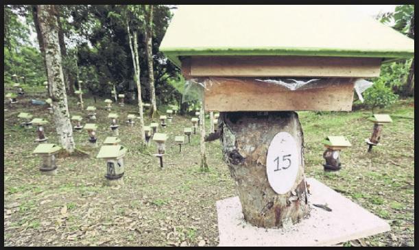 anda mencari sarang lebah kelulut untuk dijual di johor bahru skudai senai kulai masai pasir gudang gelang patah pekan nanas pontian