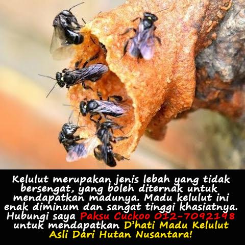 dhati madu kelulut asli asli dari hutan pembekal dan pengedar madu kelulut asli seluruh malaysia johor melaka negeri sembilan selangor kuala lumpur perak pulau pinang kedah perlis terengganu pahang kelantan sabah dan sarawak. madu kelulut asli untuk dijual