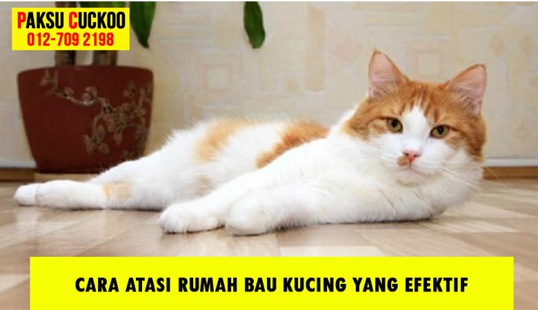 bagaimana cara berkesan tips panduan petua produk untuk hilangkan atasi masalah rumah bau kucing najis air kencing kucing dan bulu guna kelebihan penapis udara cuckoo