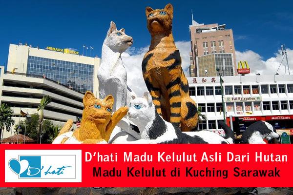 dhati madu kelulut asli dari hutan madu kelulut di kuching madu lebah kelulut kuching sarawak dan seluruh malaysia