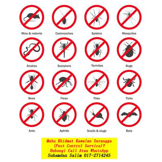 syarikat membasmi kawalan serangga perosak masalah serangan anai-anai nyamuk tikus semut lipas burung kelawar fumigation services semburan disinfection covid-19 Bukit Nanas kl