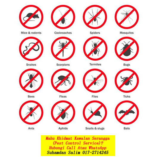 syarikat membasmi kawalan serangga perosak masalah serangan anai-anai nyamuk tikus semut lipas burung kelawar fumigation services semburan disinfection covid-19 taman ibukota kl